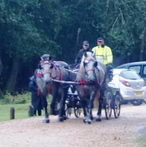 British Heavy Horse Driving Trials Beer Barrel Run