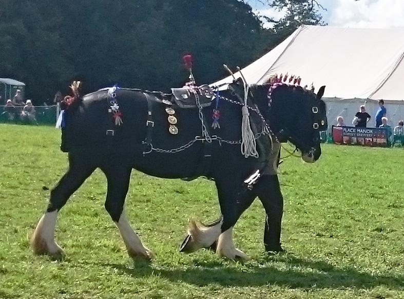 Romsey Show Flack sponsors Heavy Horse Class
